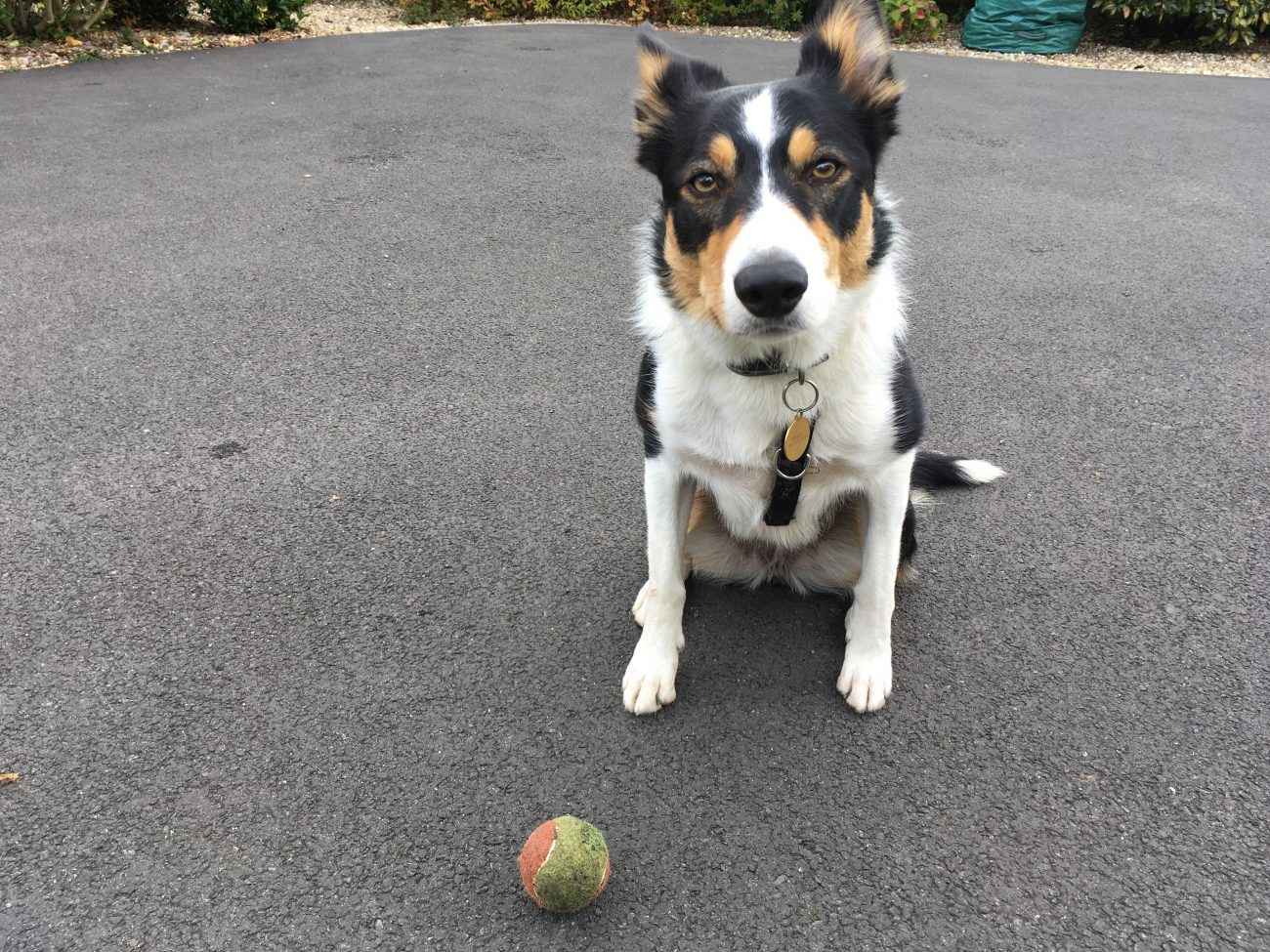 The Abc Of Border Collies Part 3 A